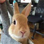 きなこウサギ